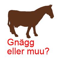 Häst eller ko